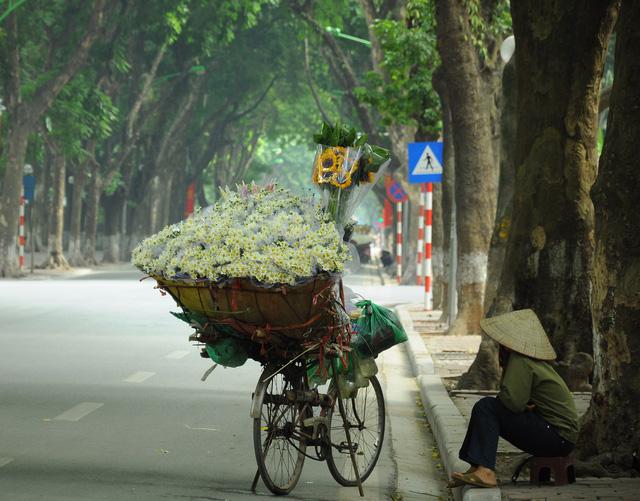 Cúc họa mi rợp đường Hà Nội, làm say đắm lòng người - Ảnh 11.