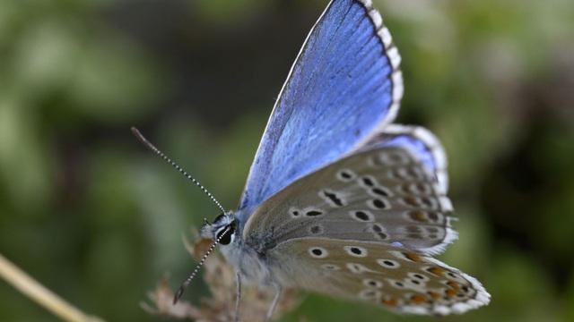 Ô nhiễm ánh sáng khiến côn trùng tuyệt chủng hàng loạt - Ảnh 1.
