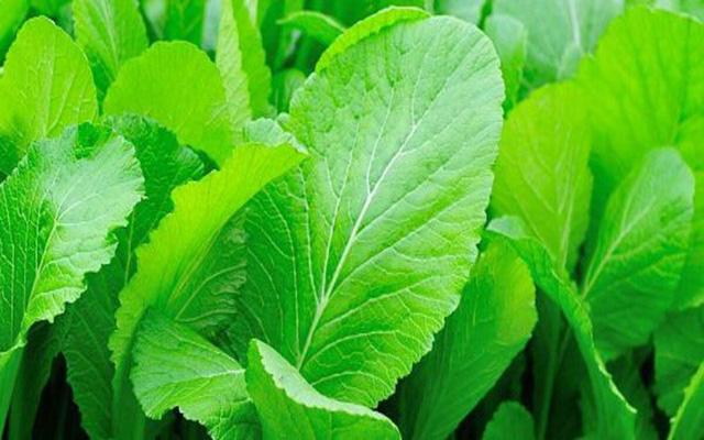 Những loại rau tốt cho người bị đau dạ dày - Ảnh 6.