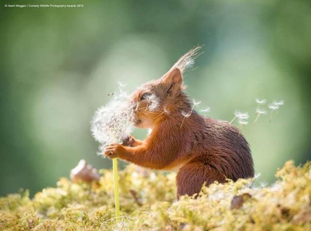 Những khoảnh khắc đáng yêu của các loài động vật khiến bạn bật cười - Ảnh 1.