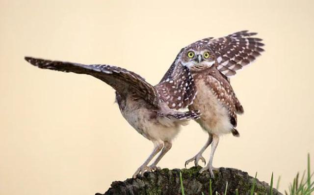 Những khoảnh khắc đáng yêu của các loài động vật khiến bạn bật cười - Ảnh 11.