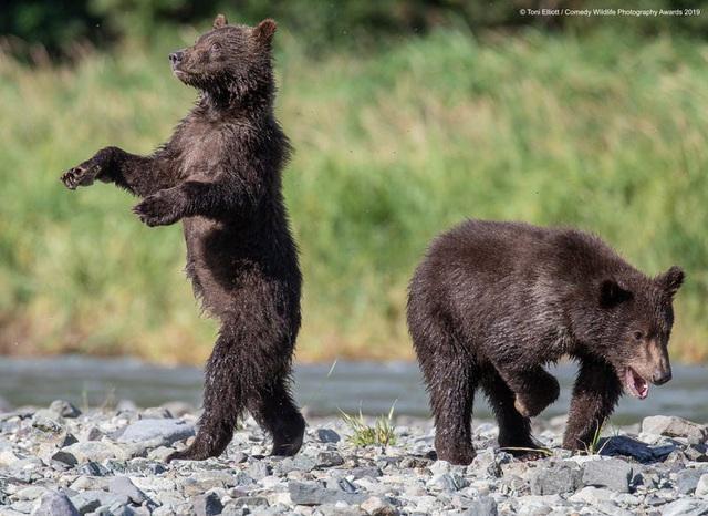 Những khoảnh khắc đáng yêu của các loài động vật khiến bạn bật cười - Ảnh 14.