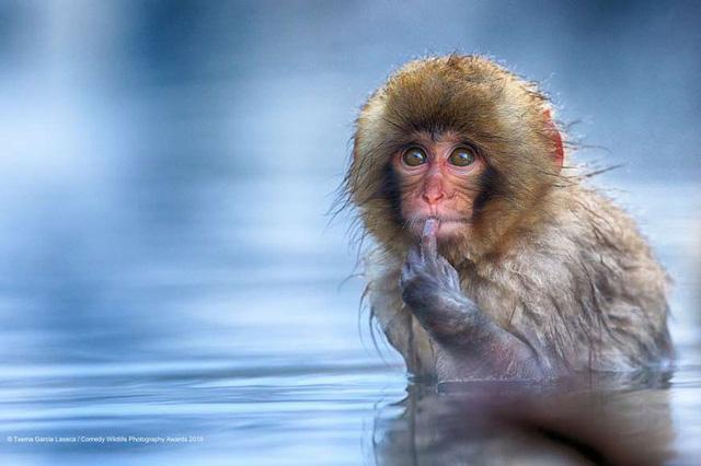 Những khoảnh khắc đáng yêu của các loài động vật khiến bạn bật cười - Ảnh 4.