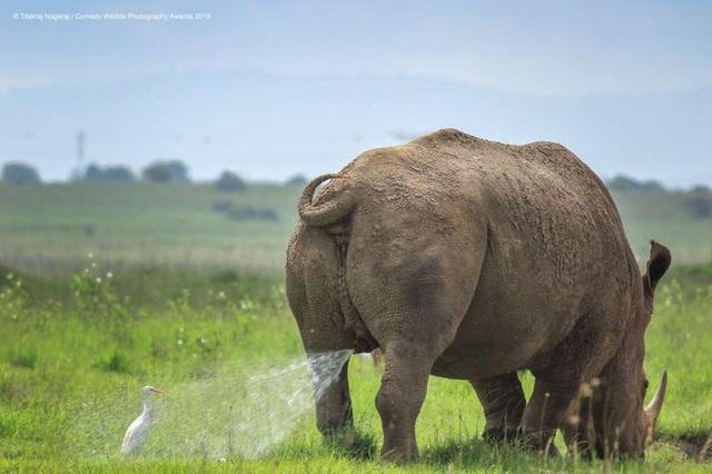 Những khoảnh khắc đáng yêu của các loài động vật khiến bạn bật cười - Ảnh 5.