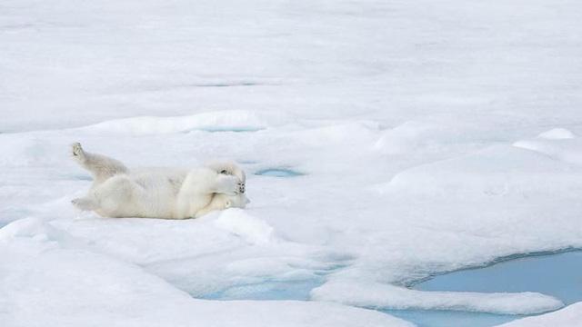 Những khoảnh khắc đáng yêu của các loài động vật khiến bạn bật cười - Ảnh 7.
