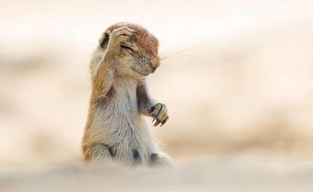 Những khoảnh khắc đáng yêu của các loài động vật khiến bạn bật cười - Ảnh 10.