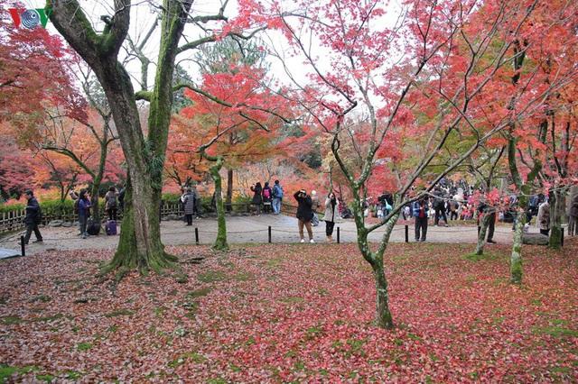 Tới ngôi chùa ngắm lá đỏ đẹp nhất Kyoto - Ảnh 10.