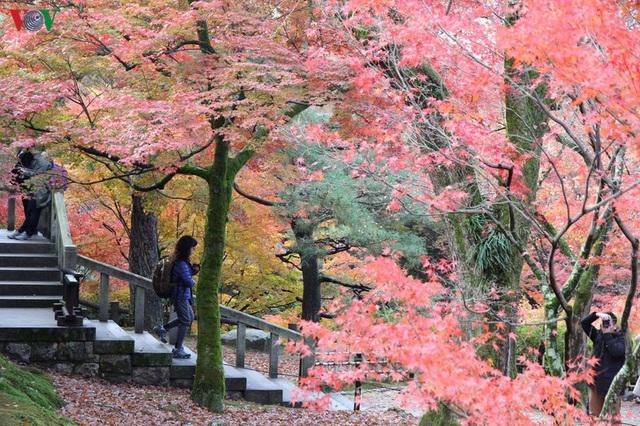 Tới ngôi chùa ngắm lá đỏ đẹp nhất Kyoto - Ảnh 11.