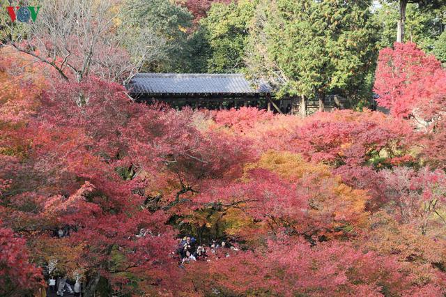 Tới ngôi chùa ngắm lá đỏ đẹp nhất Kyoto - Ảnh 4.