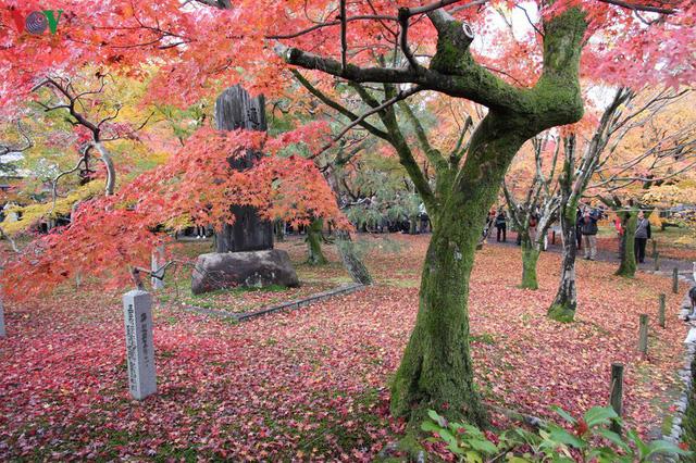 Tới ngôi chùa ngắm lá đỏ đẹp nhất Kyoto - Ảnh 5.