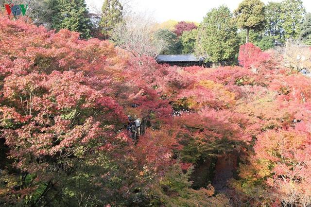 Tới ngôi chùa ngắm lá đỏ đẹp nhất Kyoto - Ảnh 7.