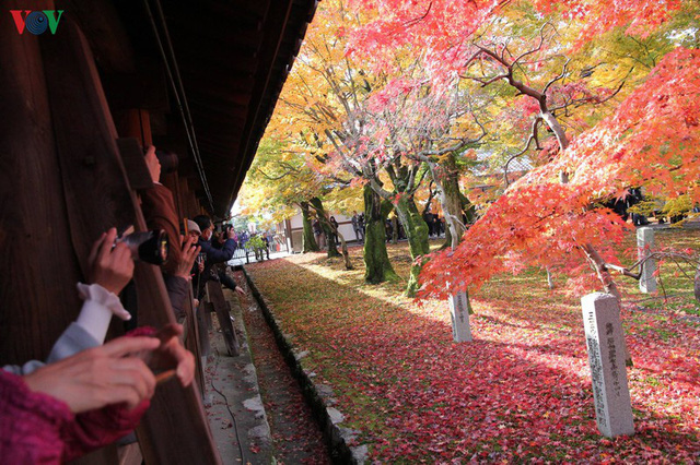 Tới ngôi chùa ngắm lá đỏ đẹp nhất Kyoto - Ảnh 9.