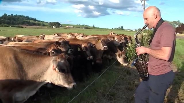 Khi động vật biết cảm nhạc - Ảnh 4.