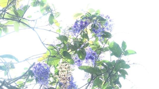 Cây mai xanh tại làng hoa Sa Đéc hút khách - Ảnh 1.