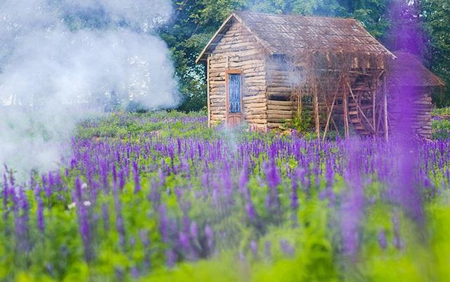 """Sau cúc họa mi, giới trẻ lại """"sống ảo"""" với cánh đồng hoa tím mộng mơ - Ảnh 4."""
