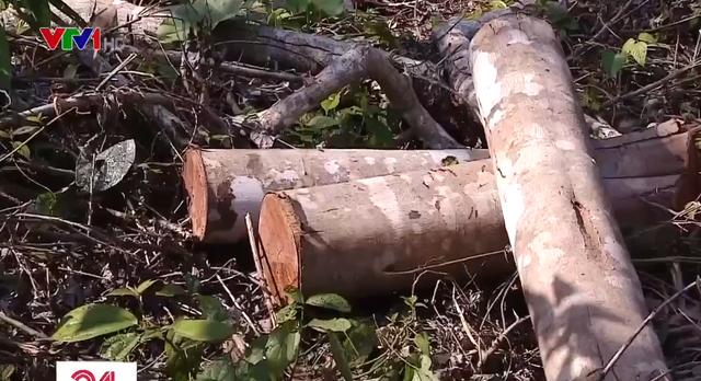 Lâm tặc đốn hạ hàng trăm cây gỗ rừng tại Thanh Hóa - Ảnh 2.