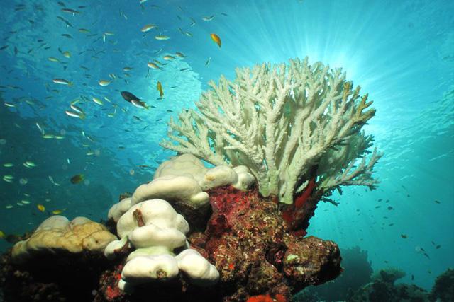 Florida cấm kem chống nắng để bảo vệ rặng san hô - Ảnh 1.