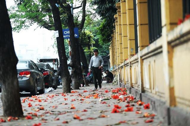 Rạo rực mùa hoa gạo giữa thủ đô - Ảnh 8.