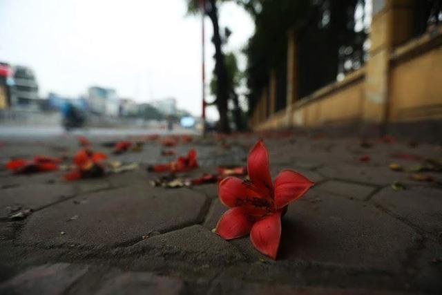 Rạo rực mùa hoa gạo giữa thủ đô - Ảnh 7.