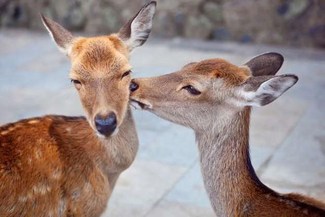 """Những cách thể hiện """"tình thân mến thương"""" của các loài động vật - Ảnh 1."""