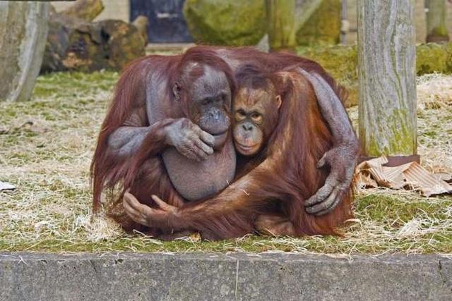 """Những cách thể hiện """"tình thân mến thương"""" của các loài động vật - Ảnh 2."""