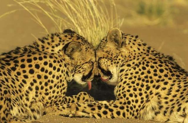 """Những cách thể hiện """"tình thân mến thương"""" của các loài động vật - Ảnh 11."""