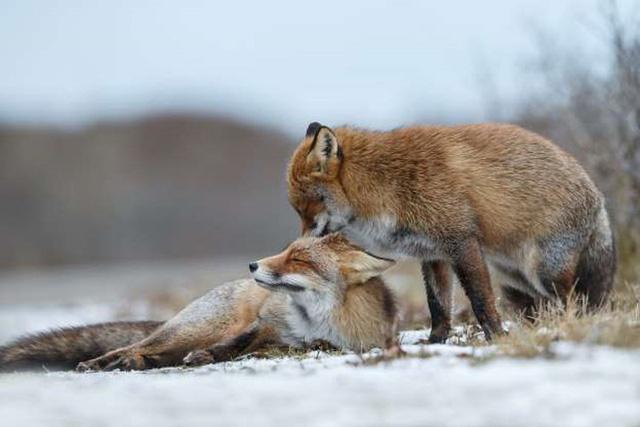 """Những cách thể hiện """"tình thân mến thương"""" của các loài động vật - Ảnh 13."""