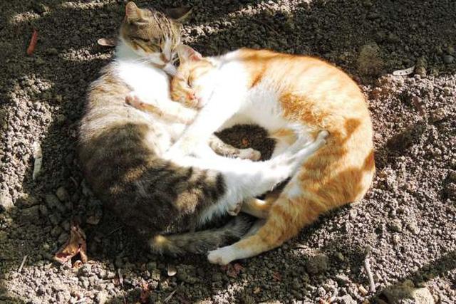 """Những cách thể hiện """"tình thân mến thương"""" của các loài động vật - Ảnh 14."""