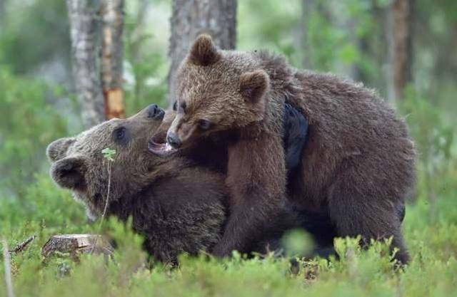 """Những cách thể hiện """"tình thân mến thương"""" của các loài động vật - Ảnh 17."""
