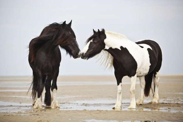 """Những cách thể hiện """"tình thân mến thương"""" của các loài động vật - Ảnh 19."""