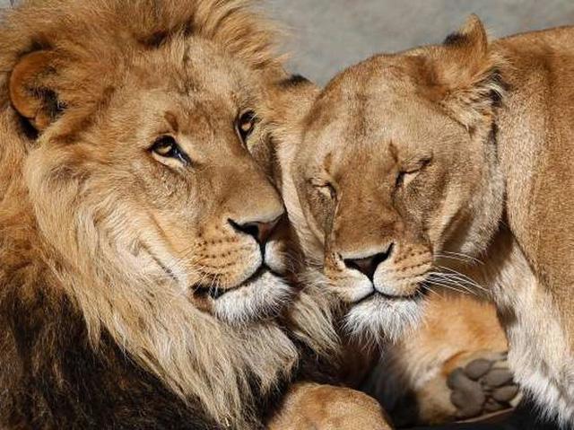 """Những cách thể hiện """"tình thân mến thương"""" của các loài động vật - Ảnh 3."""