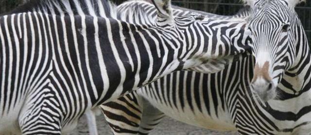 """Những cách thể hiện """"tình thân mến thương"""" của các loài động vật - Ảnh 4."""