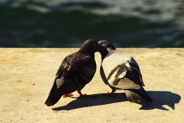 """Những cách thể hiện """"tình thân mến thương"""" của các loài động vật - Ảnh 5."""
