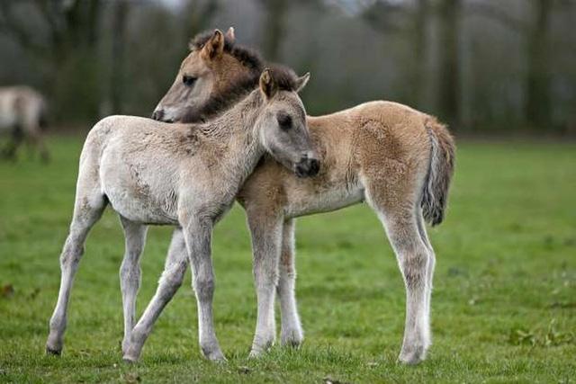 """Những cách thể hiện """"tình thân mến thương"""" của các loài động vật - Ảnh 6."""