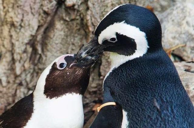 """Những cách thể hiện """"tình thân mến thương"""" của các loài động vật - Ảnh 7."""
