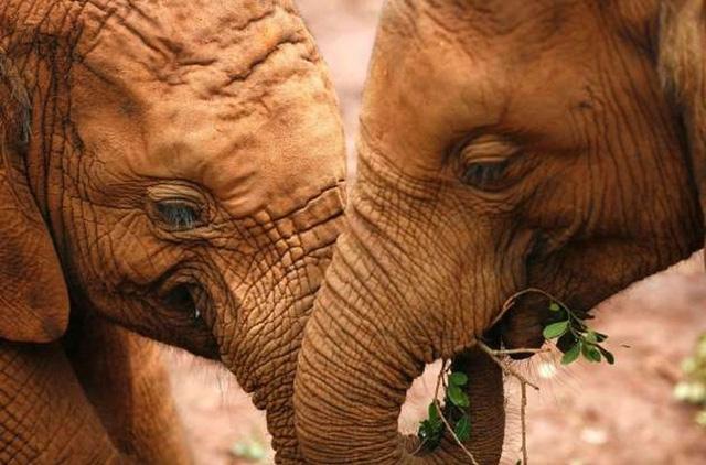 """Những cách thể hiện """"tình thân mến thương"""" của các loài động vật - Ảnh 8."""