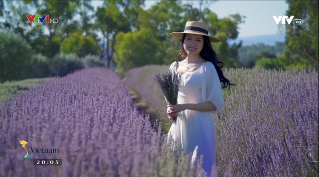 Có một mùa oải hương ở Melbourne - Ảnh 1.
