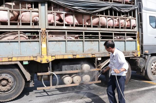 Dịch tả lợn châu Phi trở lại, Bắc Trung Bộ thiệt hại hàng chục nghìn tỷ đồng - Ảnh 2.