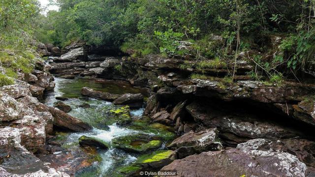Khám phá thảm thực vật kỳ lạ tại dòng sông đẹp nhất thế giới - Ảnh 4.