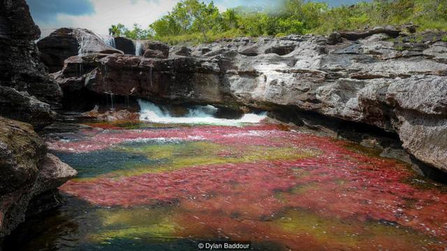 Khám phá thảm thực vật kỳ lạ tại dòng sông đẹp nhất thế giới - Ảnh 1.