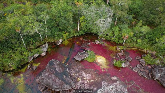 Khám phá thảm thực vật kỳ lạ tại dòng sông đẹp nhất thế giới - Ảnh 2.