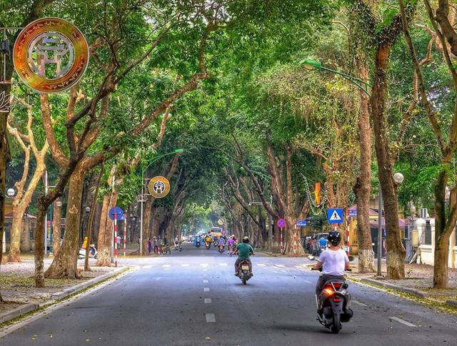 Hà Nội mùa lá sấu rụng - Ảnh 1.