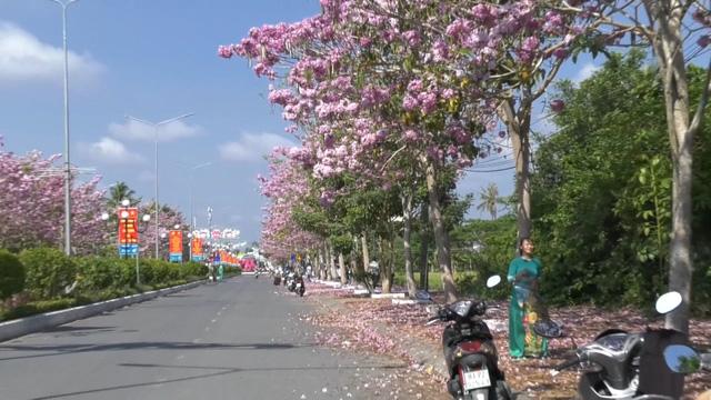 Ngập tràn sắc hoa kèn hồng tại TP.HCM - Ảnh 1.
