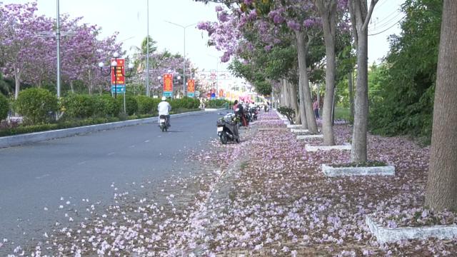 Ngập tràn sắc hoa kèn hồng tại TP.HCM - Ảnh 2.