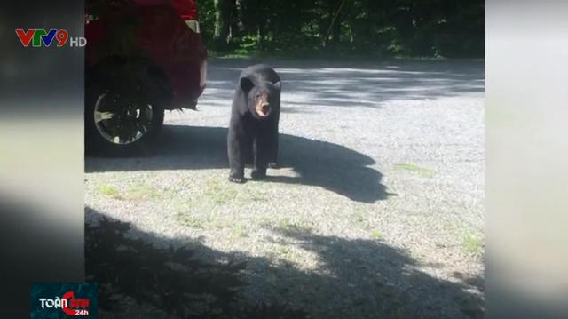 Gia đình gấu muốn… trộm xe hơi - Ảnh 1.