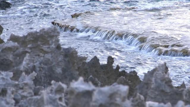Khám phá bãi san hô cổ ở Hang Rái, Ninh Thuận - Ảnh 4.