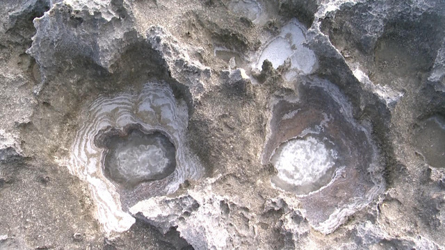 Khám phá bãi san hô cổ ở Hang Rái, Ninh Thuận - Ảnh 3.