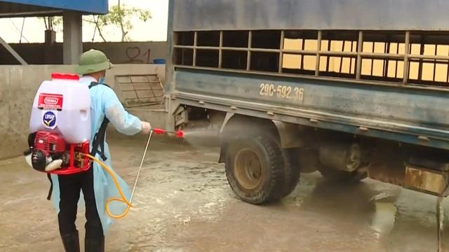 19% tổng đàn lợn của Hà Nội bị tiêu hủy vì dịch tả lợn châu Phi - Ảnh 2.