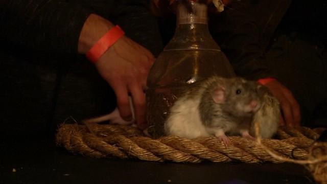 Uống cocktail với chuột trong quán bar tại Mỹ - Ảnh 1.