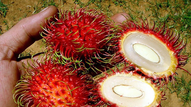 Lá và trái chôm chôm Việt Nam được chiết xuất thành mỹ phẩm - Ảnh 1.